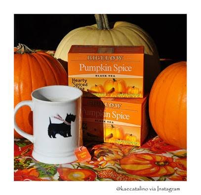 bigelow-tea-pumpkin-spice-tea